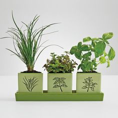 """The secret to great Italian cooking? Using the freshest ingredients. A delicious gift for the gardener or chef, this window gardening kit features basil, oregano and chives.   •includes three glazed ceramic containers with debossed herb illustrations and a coordinating tray  •also includes premium seeds, soil and instructions  •tray measures 12"""" x 4"""" x 1 1/4"""" high  •pots measure 3 1/2"""" square"""