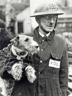 "Wire-haired fox terrier ""Beauty"", photographed with her human, PDSA (People's Dispensary for Sick Animals) Superintendent Bill Barnet.  She was credited with rescuing 63 animals from the ruins of the London Blitz, 1940-'41, in recognition of which she was awarded the PDSA Dickin Medal - the ""Animals' Victoria Cross""."