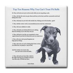 Top Ten Reasons Why You Can't Trust Pit Bulls. Must Read especially for a Pit Bull lover. Pit Bulls, Haha So True, Pit Bull Love, Dog Quotes, Animal Quotes, Dogs And Puppies, Doggies, Dogs 101, Dachshunds