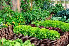 Din køkkenhave kræver pleje og vedligeholdelse året rundt