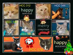 These cats desperately need a save by 12:30pm TODAY (Wed 24/12/14). If you are a rescue or know a rescue that can help, please contact Hawkesbury Pound, NSW