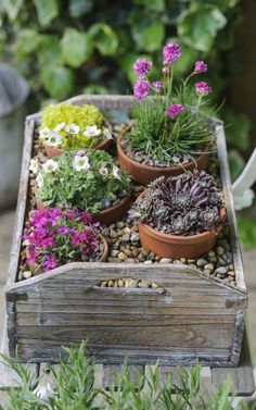 The best spring pots to brighten up your garden Alpine Garden, Alpine Plants, Easy Garden, Garden Pots, Rockery Garden, Succulent Landscaping, Side Garden, Beautiful Flowers Garden, Beautiful Gardens