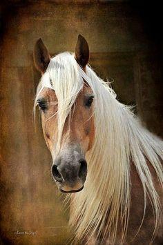 (96) Horses Are Amazing - Photos