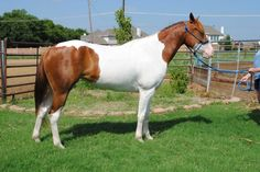 Gorgeous Mare, Well Started!