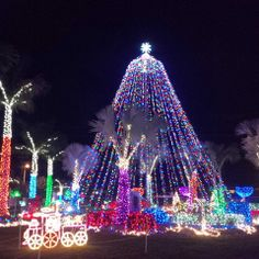 Tree of Lights Cayman www.passengerpicks.com Caribbean Christmas, Grand Cayman, Tree Lighting, Christmas Fun, Good Times, Around The Worlds, Island, Lights, Holiday Decor