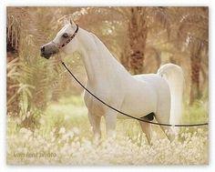 Tous les plus beaux chevaux du monde : Blog - Teemix