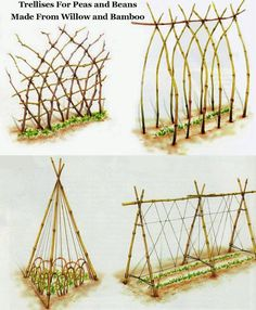 How to Build a Trellis for Growing Peas. DIY Trellis ideas using willow and bamboo. How to Build a Trellis for Growing Peas. DIY Trellis ideas using willow and bamboo. Diy Trellis, Garden Trellis, Trellis Ideas, Bamboo Trellis, Bean Trellis, Tomato Trellis, Cucumber Trellis, Garden Stakes, Trellis