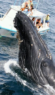Humpback Whale saying Hi