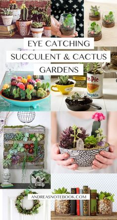 Eye catching DIY succulent and cactus gardens!