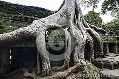 Ta Prohm (Tomb Raider Temple) At Angkor, Cambodia. UNESCO World Heritage Site. Stock Photo - Image of raider, buddha: 34063908 Ta Prohm, Angkor, World Heritage Sites, Raiders, Buddhism, Cambodia, Temple, Lion Sculpture, Royalty Free Stock Photos
