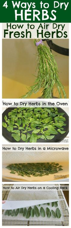 How to Dry Herbs- everything you needed to know... ever! All the tips and tricks you need.