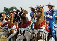 Parade tack - saddles, carnation breast collars, red or green corona blankets, bridles with a carnation San Diego, Horse Flowers, Horse Costumes, Ranch, American Saddlebred, Horse Bridle, Horse Breeds, Show Horses, Beautiful Horses
