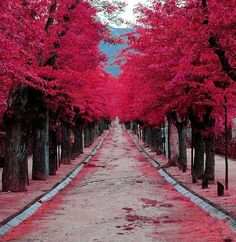 Burgundy St, Madrid, Spain actually looks more hot pink