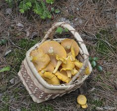 Mushroom foraging is a skill that requires time and experience. Beginners who want to do it safely need to embrace a simple three-letter word.