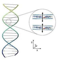 Quantum Entanglement Holds DNA Together | Amazing Science | Scoop.it