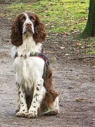 Dog Training tips, train your own dog, review training cources