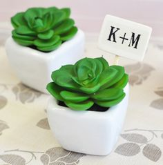 Mini Potted Succulents - Wedding Favors
