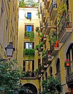 This is how most of my neighbors and I live.  I wish management would do a better job of taking care of us or let us go condo.  I love city life with plants!