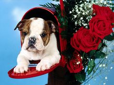 Cute Christmas Puppies 8589 Hd Wallpapers