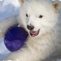Orphaned Polar Bear Cub Flies UPS to Buffalo Zoo : DNews
