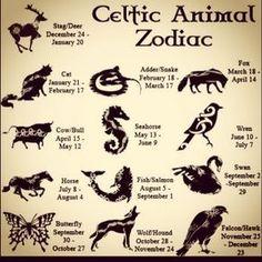 The Celtic Animal Zodiac. I'm a Falcon/Hawk, whi. The Celtic Animal Zodiac. I'm a Falcon/Hawk, which animal are you? Celtic Zodiac Signs, Celtic Astrology, Zodiac Signs Astrology, Zodiac Symbols, Druid Symbols, Celtic Symbols, Celtic Animals, Signo Libra, Animal Symbolism