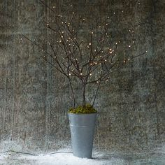 """Glowing LED bulbs illuminate this strand of delicate, paper branches, our pick for accenting indoor décor or winter plantings.- Plastic, green wire cable, paper, LED light- Plug-in- UL approved- Distance between branches: 40""""- 16' lead- Indoor use only- Branch: 39.4""""H, 2.6""""W, 3.75""""D- ImportedSmall: 3 branches, 72 bulbsLarge: 5 branches, 120 bulbs"""