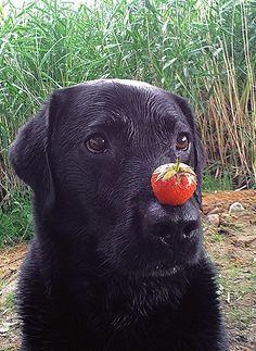 Kohlenhydrate sind Nervennahrung – auch für Hunde