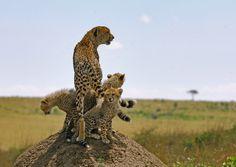 Serengeti   Serengeti - Bild 43 von 49