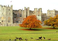 Raby Castle, Staindrop, Darlington, County Durham, Ireland.