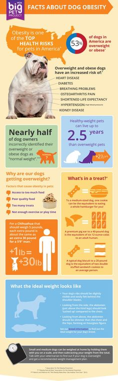 Facts about dog obesity