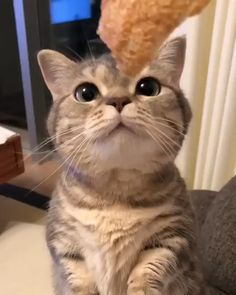 My cat likes bread – Marie - Cat Breeds Cute Cats And Kittens, I Love Cats, Crazy Cats, Kittens Cutest, Cute Funny Animals, Cute Baby Animals, Animals And Pets, Funny Cats, Pretty Cats