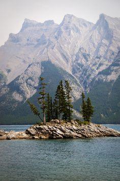 pine trees + mountains