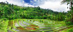 Schitterende treinreizen langs smaragdgroene rijstvelden, de onvergetelijke zonsopgang bij de Bromo-vulkaan en indrukwekkende tempelcomplexen zoals de Borobudur en einde op het tropische eiland Bali. FOX heeft een zeer complete rondreis Java - Bali met verblijf in vier- en vijfsterrensterrenhotels en zelfs ontbijt, lunches tijdens de rondreis en entreegelden zijn inclusief. Aan het einde van de reis kunt u bijkomen van alle indrukken en genieten van enkele ontspannen stranddagen in een luxe…