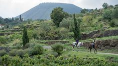 The beautiful Boutique Hotel Monaci delle Terre Nere at the foot of Mount Etna offers peaceful landscapes and subtle luxury. Country Boutique, Places In Italy, Active Volcano, Sicily, Monaco, Beautiful Places, The Incredibles, Earth, Landscape