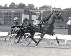 Bret Hanover one of only nine pacers to win the Triple Crown of Harness Racing for Pacers and he had 62 wins from 69 starts. The only horse to have even been made Harness Horse of the Year three times.