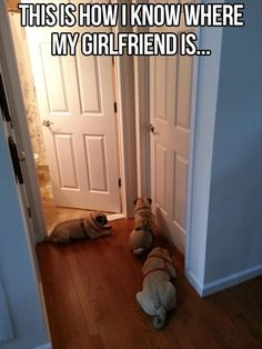 """This sis how I know where my girlfriend is..."" ~ Dog Shaming shame - Pug - follow the leader  haha"