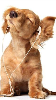 ♂ Animal humor...I love music.