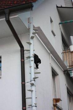 Afbeeldingsresultaat voor how to make outdoor stairs for cats
