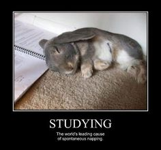 Studying....  -Humor Train
