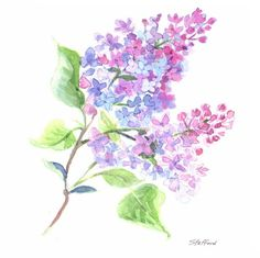 Lilac  Small Matted Print by nataliestafford on Etsy, $10.00