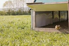 How to Build a Chicken Coop That Is Fox Proof