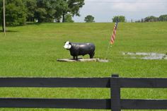 "Everyone in this part of the country (between Lebanon & Watertown TN) knows what you mean if you say ""turn by the cow""!"