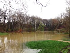 The EJC Arboretum pond's Mallards enjoyed an overflowing pond yesterday. https://www.facebook.com/EJCArboretumJMU