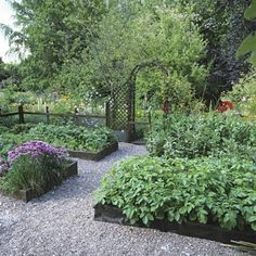 Colonial style - gravel paths and wooden board raised beds