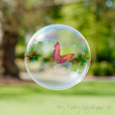 butterfly in a bubble