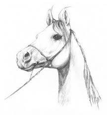 konie rysunek ołówkiem - Szukaj w Google