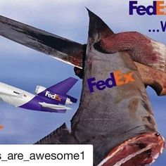 #Repost @sharks_are_awesome1 ・・・ 🦈 @FedEx has a choice to make. Are they going to join @UPS and other shipping companies and stand up for sharks, or are they going to continue contributing to sharks' extinction?  Now is the time for us all do to our part to save sharks, and demand that #FedEx stop shipping shark fins. The company is beginning to sweat and has acknowledged our request to make change to their policy and has pushed our request up to their senior leadership.  #Repost…