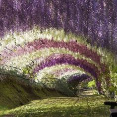 We are already missing those beautiful wisteria blooms. The best time to catch them is mid April to early May and our favorite garden to experience them in all their glory is the Kawachi Fuji Garden in Kitakyushu. Wisteria Tunnel, Wisteria Garden, Hidden Beach, Beautiful Flowers Garden, Beautiful Gardens, Japan Photo, Portugal Travel, Day Tours, Amazing Nature