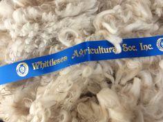 Fine fleece win at Whittlesea Agricultural Show 2017 -wattlegrovealpacas Alpacas, Whittling, Culture, Sculpting, Wood Carving