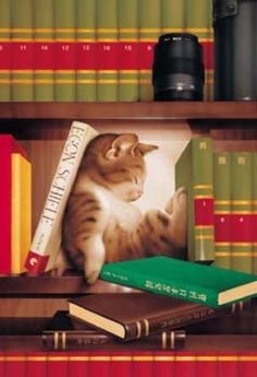 Nap on the bookshelf